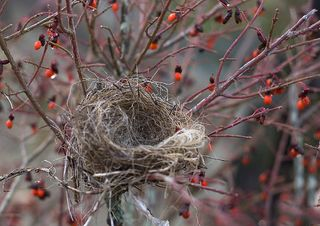 Empty_nest_by_muffet