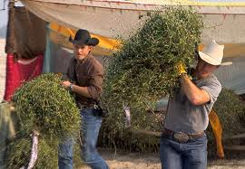 cowboy up, cowboy, hauling hay, hard work, work, attitude, good attitude, positive, chin up