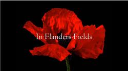 Flanders poppy1